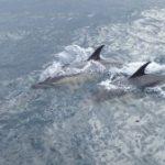 Dolphins Mallorca